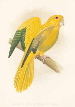 Golden, or Queen of Bavaria's Parrot. Parrots in Captivity. William Thomas Greene