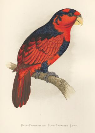 Blue-Crowned or Black-Breasted Lory. Parrots in Captivity. William Thomas Greene.