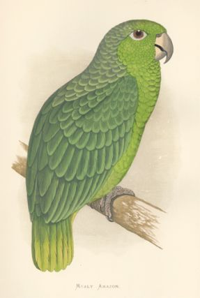 Mealy Amazon. Parrots in Captivity. William Thomas Greene
