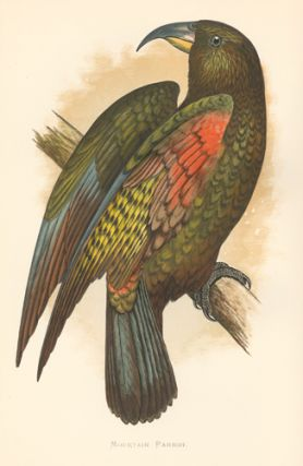 Mountain Parrot. Parrots in Captivity. William Thomas Greene.