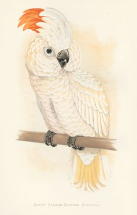 Great Salmon-Crested Cockatoo. Parrots in Captivity.