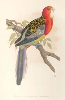 Rose-Hill or Rosella Parrakeet. Parrots in Captivity. William Thomas Greene