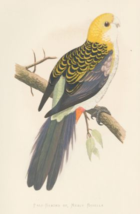 Pale-Headed or Mealy Rosella. Parrots in Captivity. William Thomas Greene.