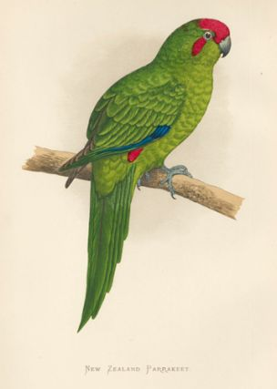 New Zealand Parrakeet. Parrots in Captivity. William Thomas Greene