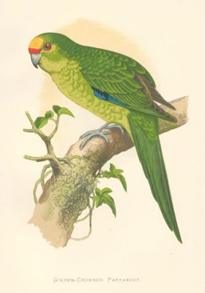 Golden-Crowned Parrakeet. Parrots in Captivity. William Thomas Greene