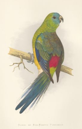 Blood- or Red-Rumped Parrakeet. Parrots in Captivity. William Thomas Greene