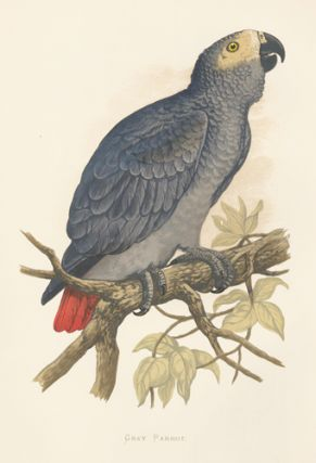 Grey Parrot. Parrots in Captivity. William Thomas Greene