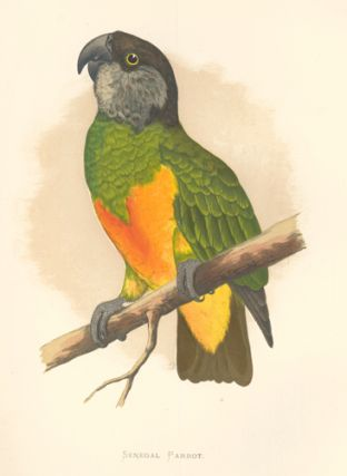 Senegal Parrot. Parrots in Captivity. William Thomas Greene