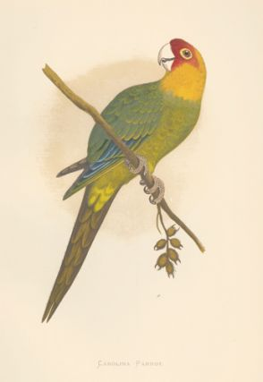 Carolina Parrot. Parrots in Captivity. William Thomas Greene