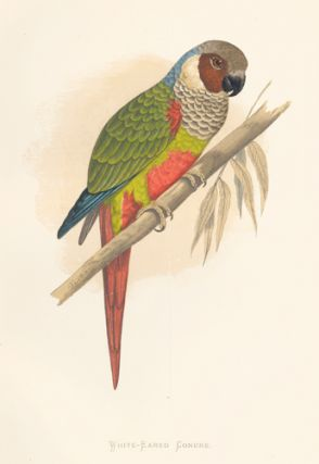 White-Eared Conure. Parrots in Captivity. William Thomas Greene.