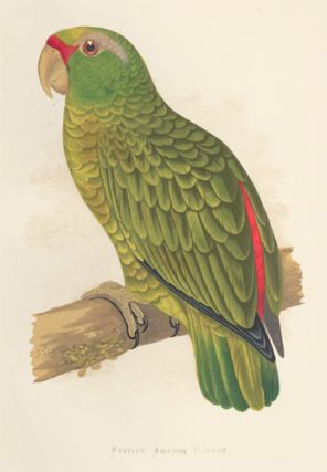 Festive Amazon Parrot. Parrots in Captivity. William Thomas Greene
