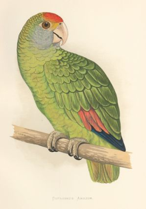 Dufresne's Amazon. Parrots in Captivity. William Thomas Greene.