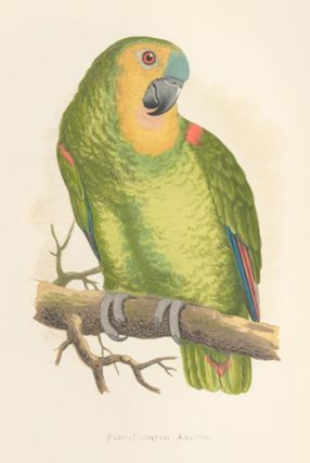 Blue-Fronted Amazon. Parrots in Captivity.