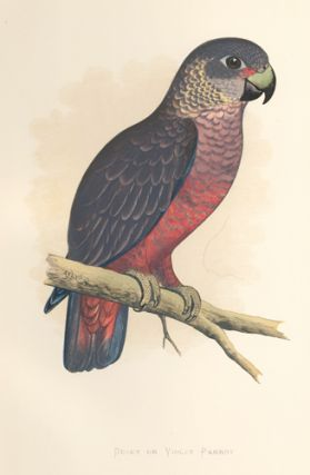 Dusky or Violet Parrot. Parrots in Captivity. William Thomas Greene.