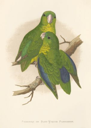 Passerine or Blue-Winged Parrakeet. Parrots in Captivity. William Thomas Greene.
