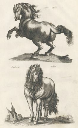 Tab. IIII. Equus Pford and Cantherins Wallach [Gelding/Wallach]. Historia Naturalis, De...