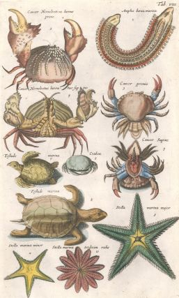 Cancer promis [crab], Testudo marina [Sea turtle], and Stella marina major [Starfish]. Historia...