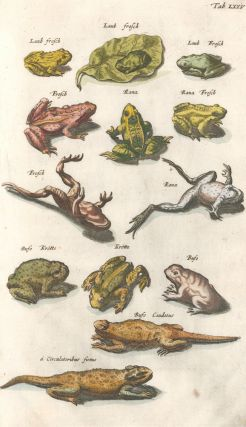 Rana Frosch [Common Frog]; Bufo, Krotte [Toad]; Bufo Caudatus [toad or salamander family, extinct...