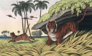 Tiger. The Instructive Picture Book. Adam White, M H. H. J