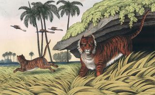 Tiger. The Instructive Picture Book.