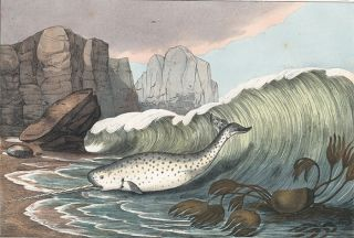 Narwhal. The Instructive Picture Book.