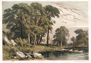 Black Poplar. The Park and the Forest. James Duffield Harding