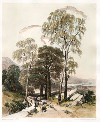 Birch and Oak. The Park and the Forest. James Duffield Harding