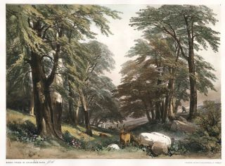 Beech Trees in Arundale Park. The Park and the Forest. James Duffield Harding.