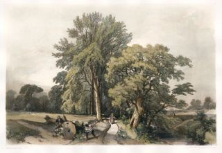 Abele and Oak. The Park and the Forest. James Duffield Harding.