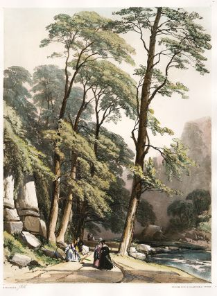 Sycamore. The Park and the Forest. James Duffield Harding
