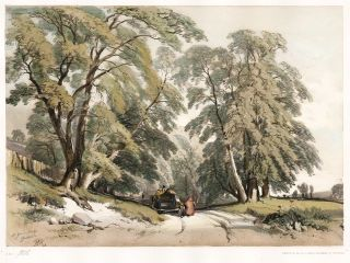 Ash. The Park and the Forest. James Duffield Harding.
