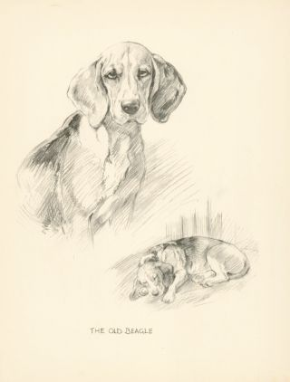 Beagle. Reverse: Bulldog. Just Dogs: Sketches in Pen & Pencil. Kathleen Frances Barker