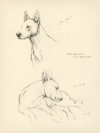 Bull Terrier. Reverse: The White Hope. Just Dogs: Sketches in Pen & Pencil. Kathleen Frances Barker