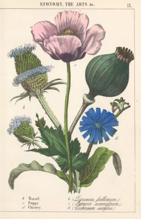 Teasel, Poppy and Chicory. Instructive Picture Book. Robert Stark