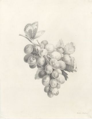 Bunch of grapes with butterfly. Sophie Schiffner, Austrian School