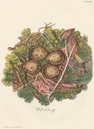 Tab. XVIII: Wald-Schnepft (Woodcock). Collection de Nids et d'Oeufs. Adam Ludwig Wirsing