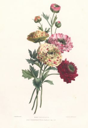 Renunculus. A Selection of Flowers. Valentine Bartholomew