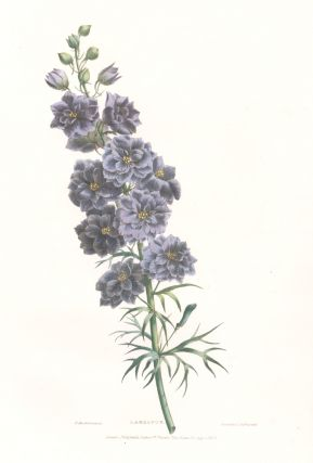 Larkspur. A Selection of Flowers. Valentine Bartholomew