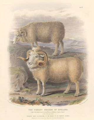 The Forest Breeds of England. The Breeds of the Domestic Animals of the British Islands. David Low