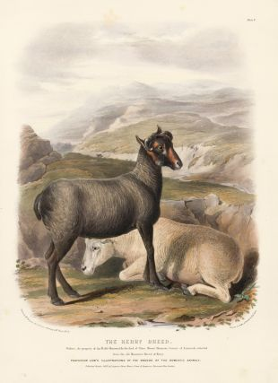 The Kerry Breed. The Breeds of the Domestic Animals of the British Islands. David Low