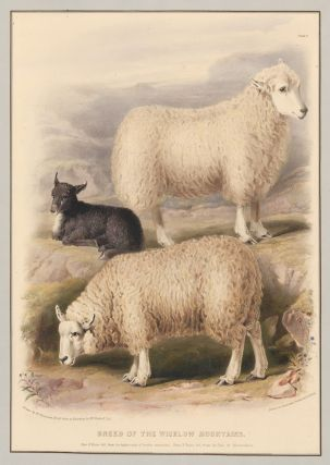 Breed of the Wicklow Mountains. The Breeds of the Domestic Animals of the British Islands. David Low.