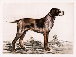 Braque Allemand [German Shorthaired Pointer]. Nos Chiens De L'Avenir. Georges Benoist