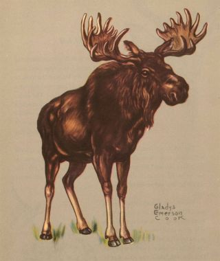 Moose. Zoo Animals. Gladys Emerson Cook