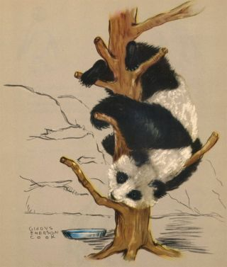 Giant Panda. Zoo Animals. Gladys Emerson Cook