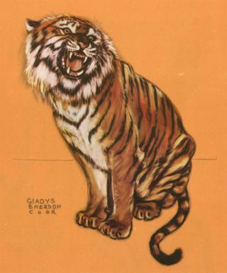 Tiger. Zoo Animals. Gladys Emerson Cook