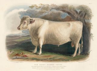 The Short-Horned Breed. The Breeds of the Domestic Animals of the British Islands. David Low, W....