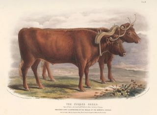 The Sussex Breed. The Breeds of the Domestic Animals of the British Islands. David Low, W. Nicholson