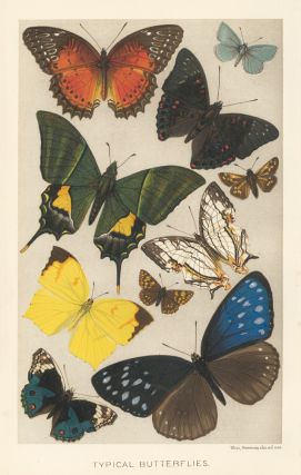 Typical Butterflies. The Royal Natural History. Richard Lydekker