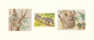 Koala Tryptic. Unknown