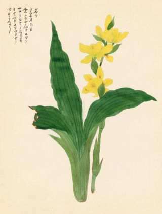 Yellow Lilies. Japanese School